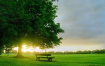优雅清新的自然美景桌面壁纸下载
